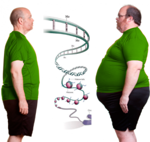 Hope For People With Obesity Predisposing Fto Gene Mydnahealth